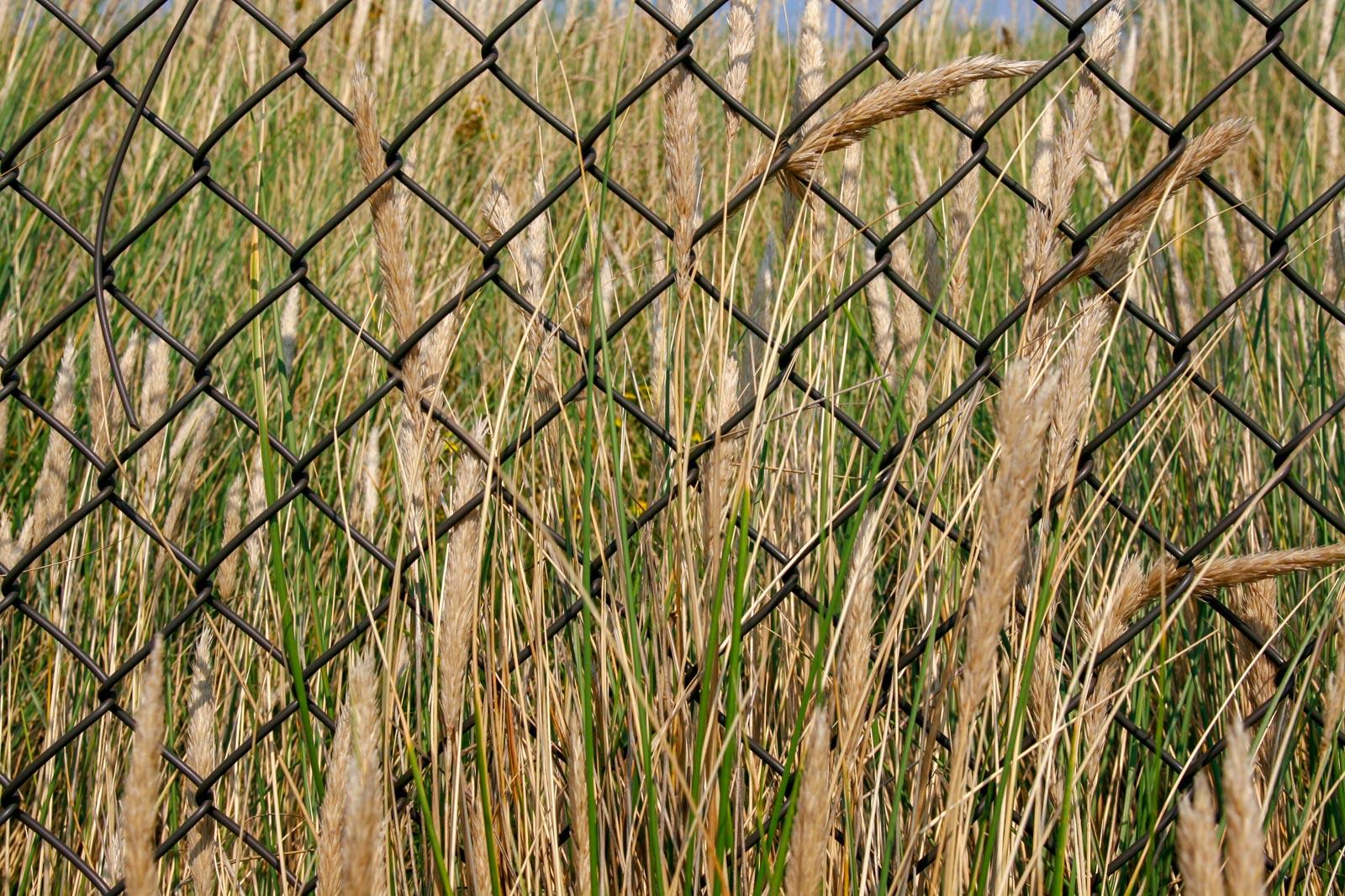 Grasstengels achter een hek
