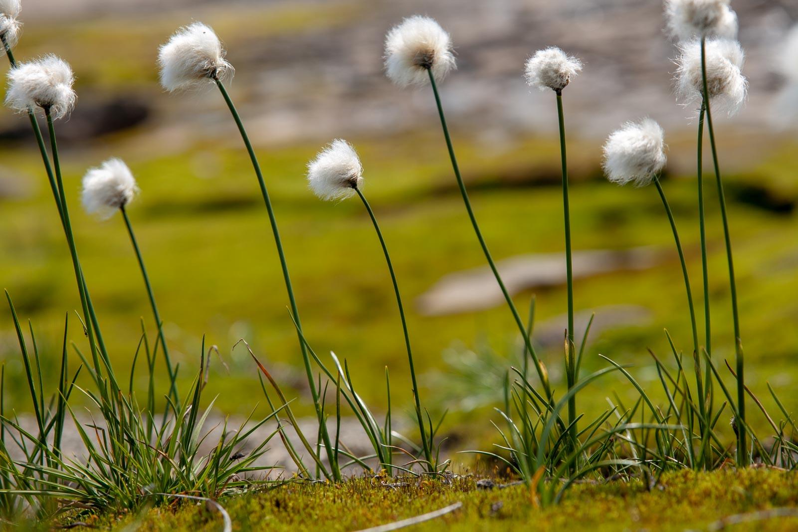 Bloemen die uit het mos groeien