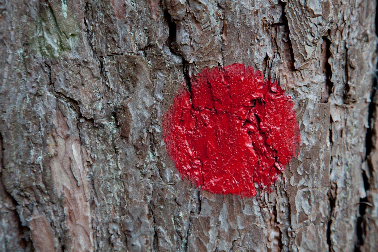 Rode stip op een boom