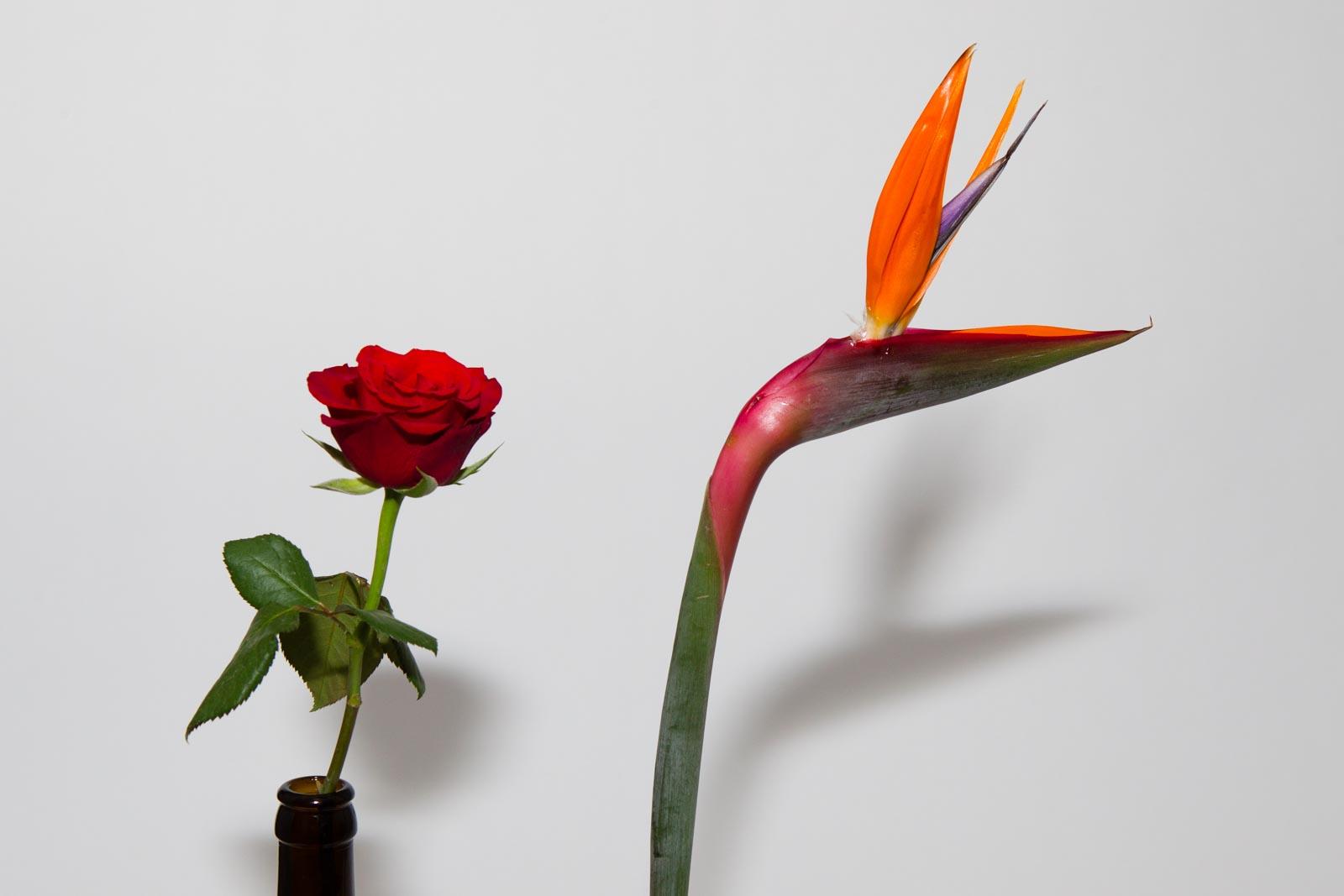 Bloemen gefotografeerd met een externe flitser en omnibounce