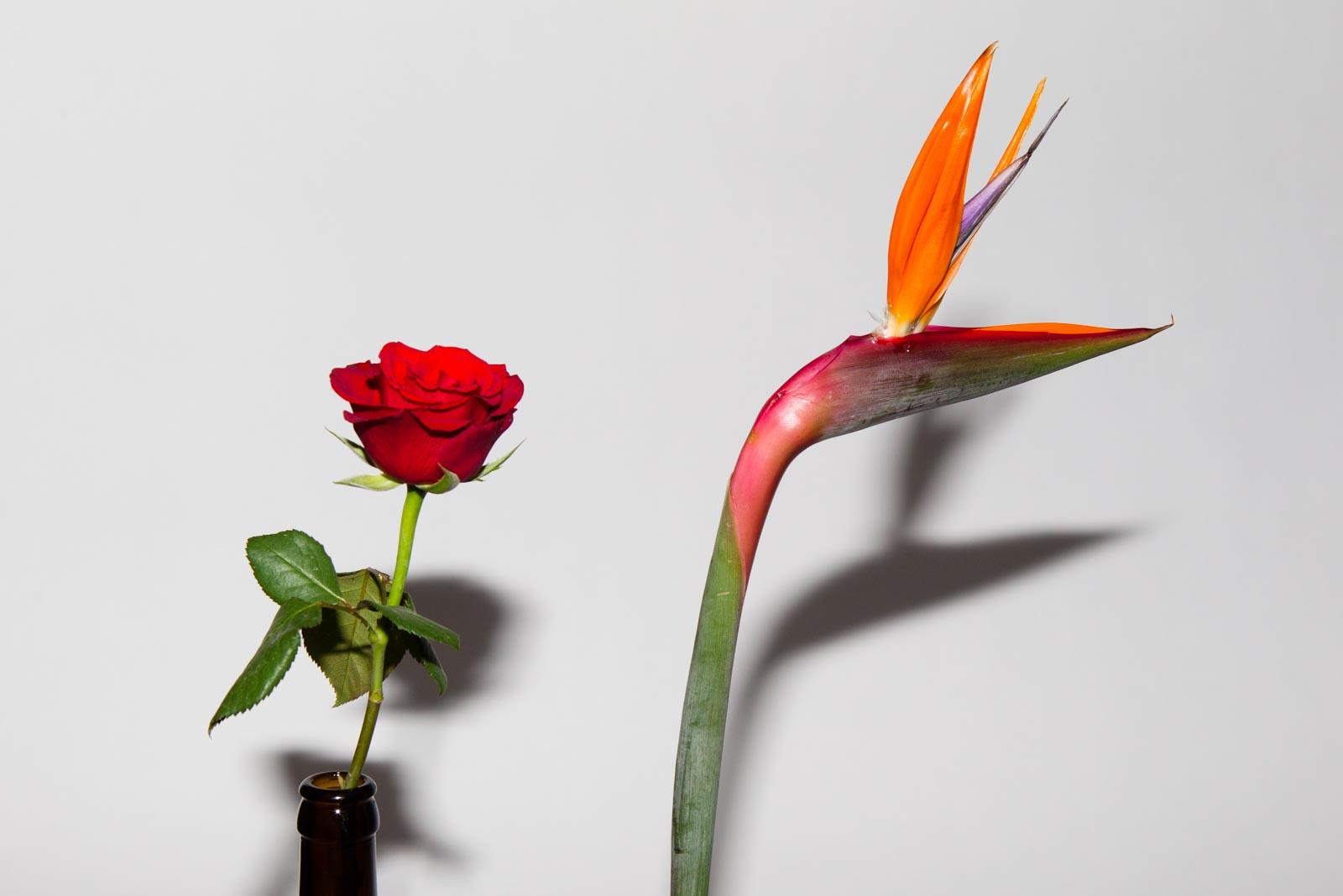 Bloemen gefotografeerd met een externe flitser recht vooruit zonder omnibounce