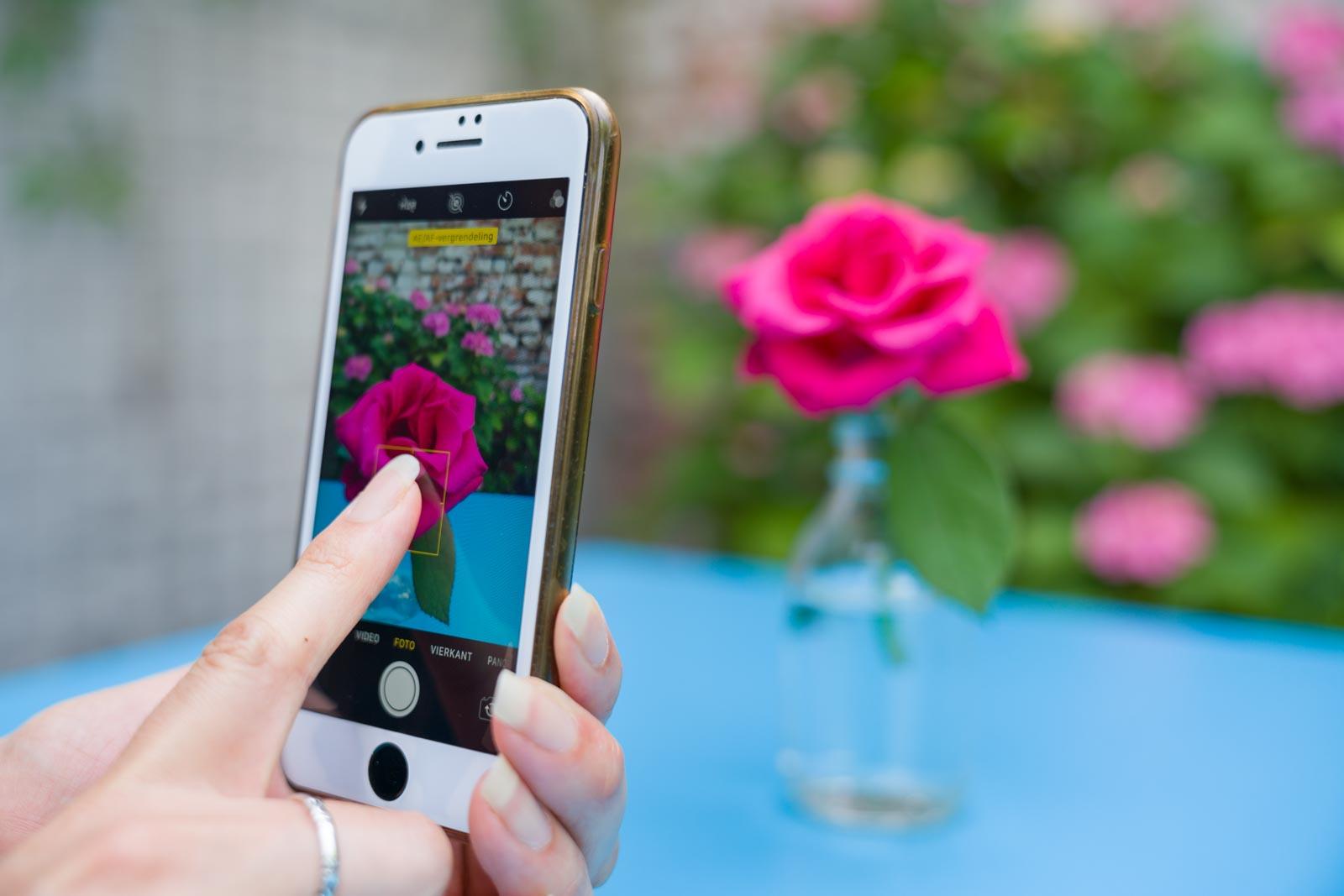 Scherpstellen op een roos met een smartphone